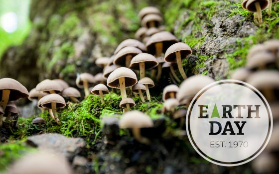 Earth Day badge over field of mushrooms on forest floor