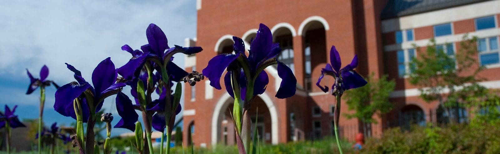Tulips outside of Ponzio Campus Center