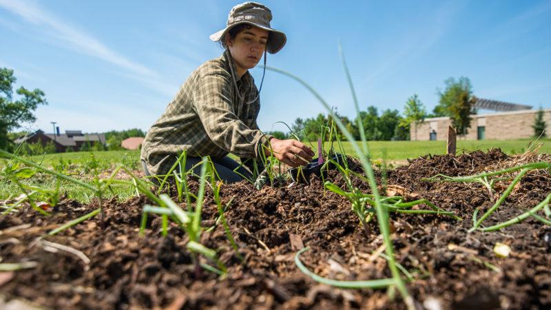 stuent planting garden
