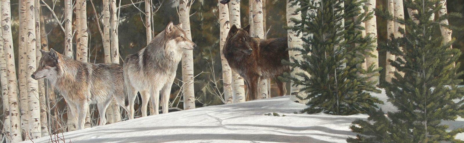 Wolf Awareness Week poster
