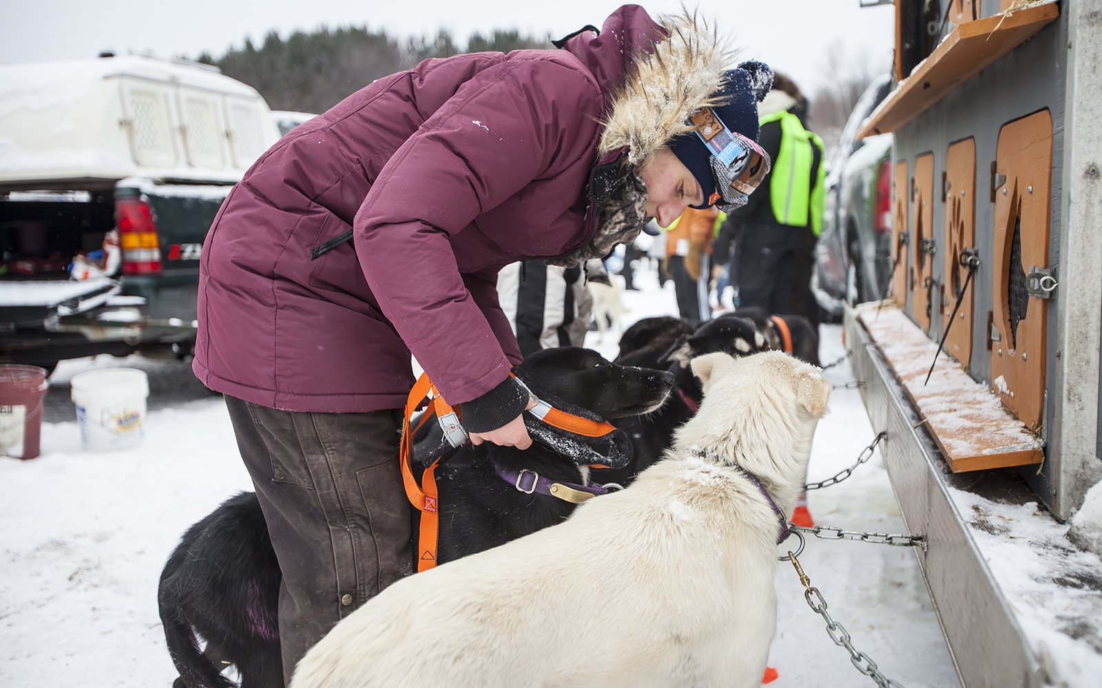 Northland College student harnesses dogs