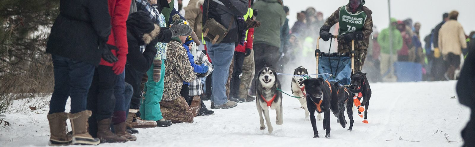 Northland College student driving a sled dog team.