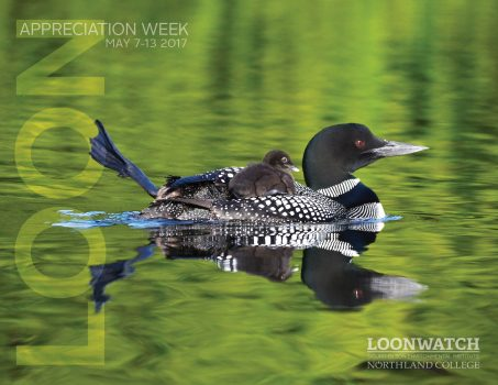 Northland College 2017 Loon Week Poster Photo by Lorna Rohloff