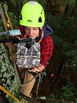 Northland College student in climbing gear high in tree collecting data for research project