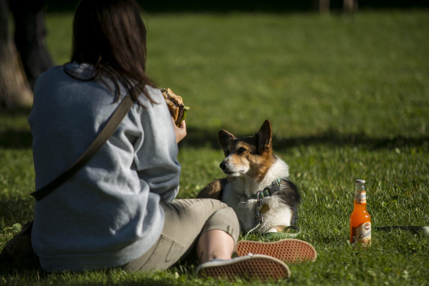 Dog looks at owner eating sandwich at Northland College Everybody Party.
