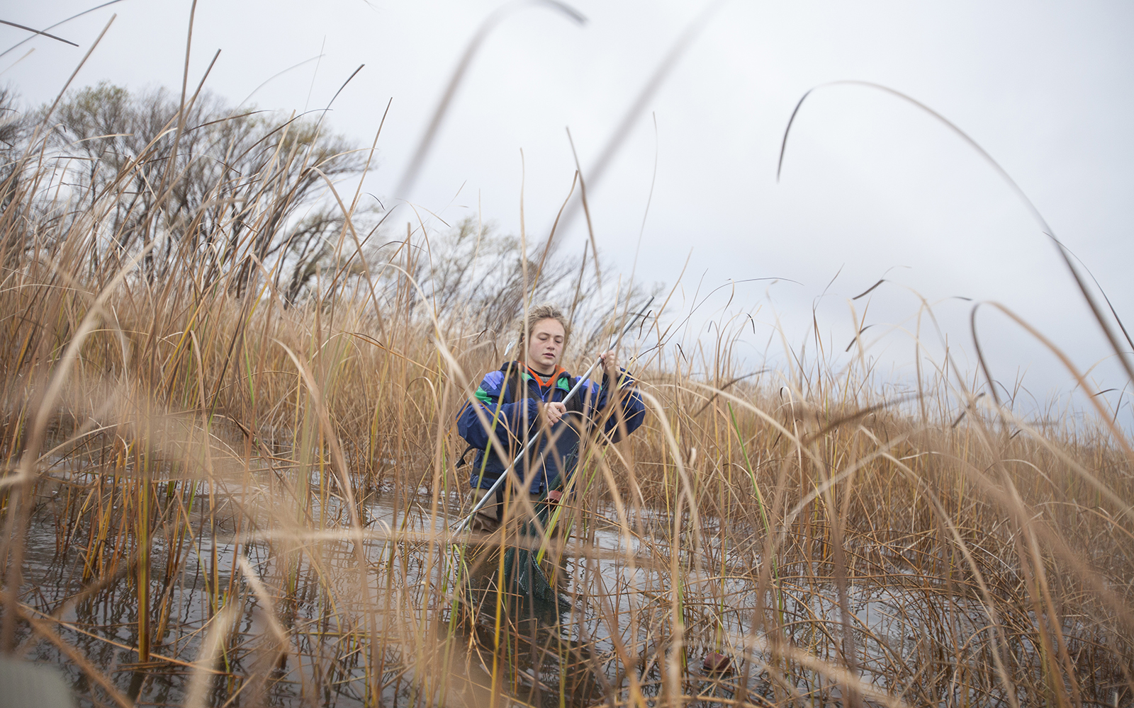 Northland College student in Lake Superior coastal wetland for field research project.