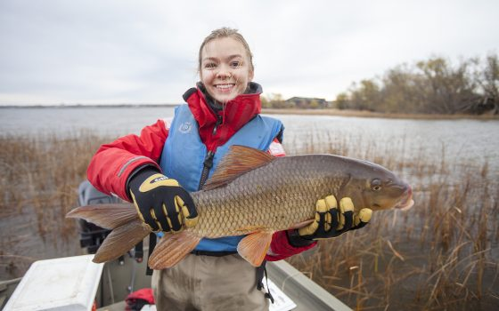 Northland College holds carp from coastal wetlands survey.