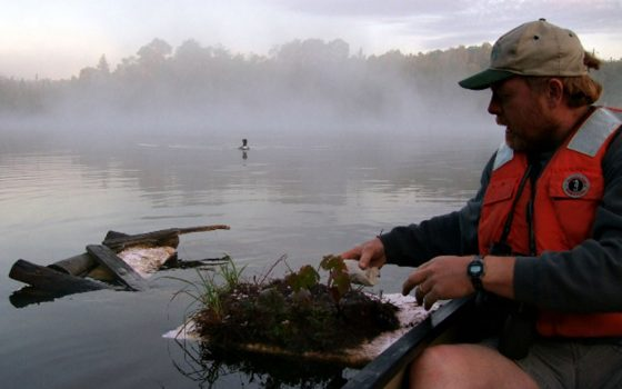 Kevin Kenow with loon habitat