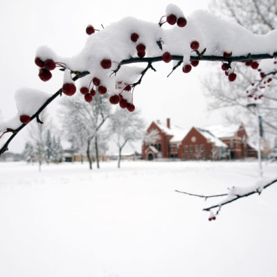 winter berries in ponzio