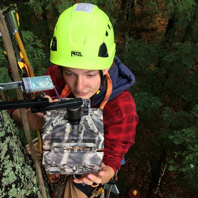 Northland College student in climbing gear high in tree collecting data for research project.