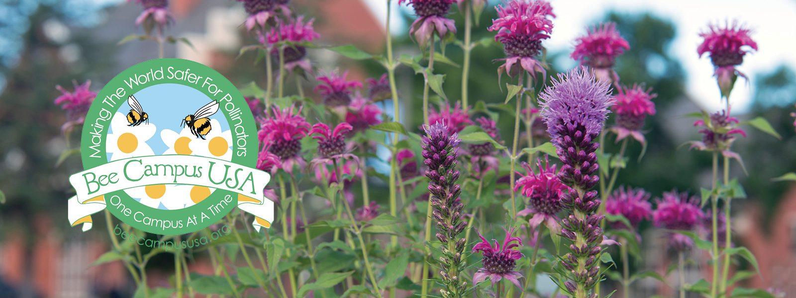 Northland College Bee Friendly Campus