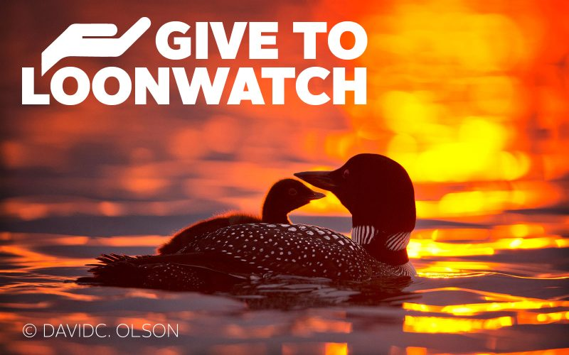 Give to Loonwatch