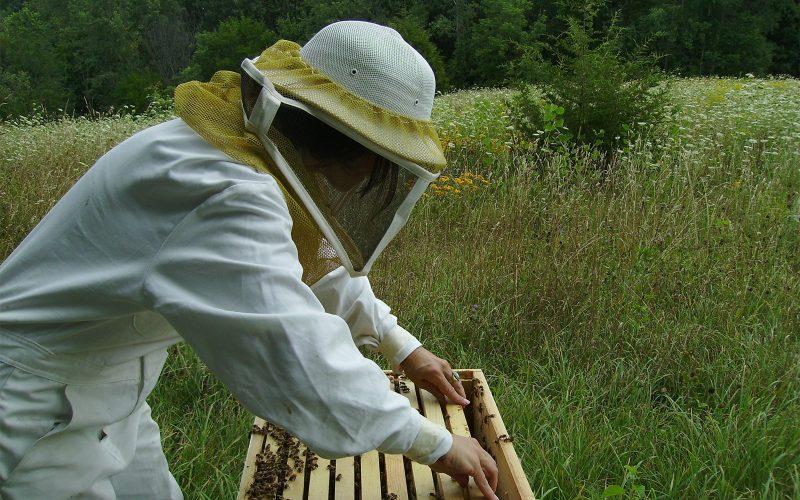 Heather Swan in Beesuit