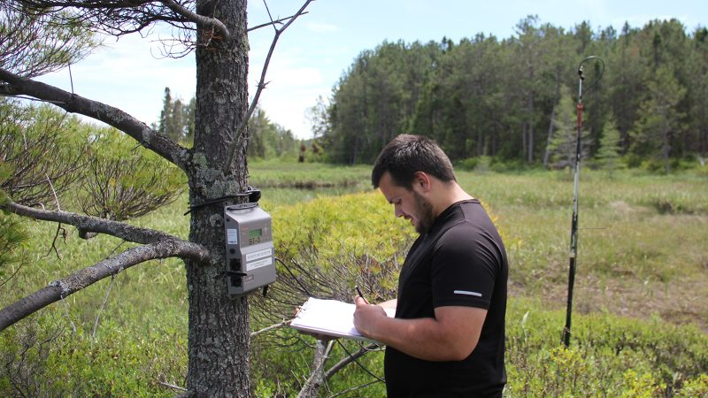 Northland College student collects data for bat research