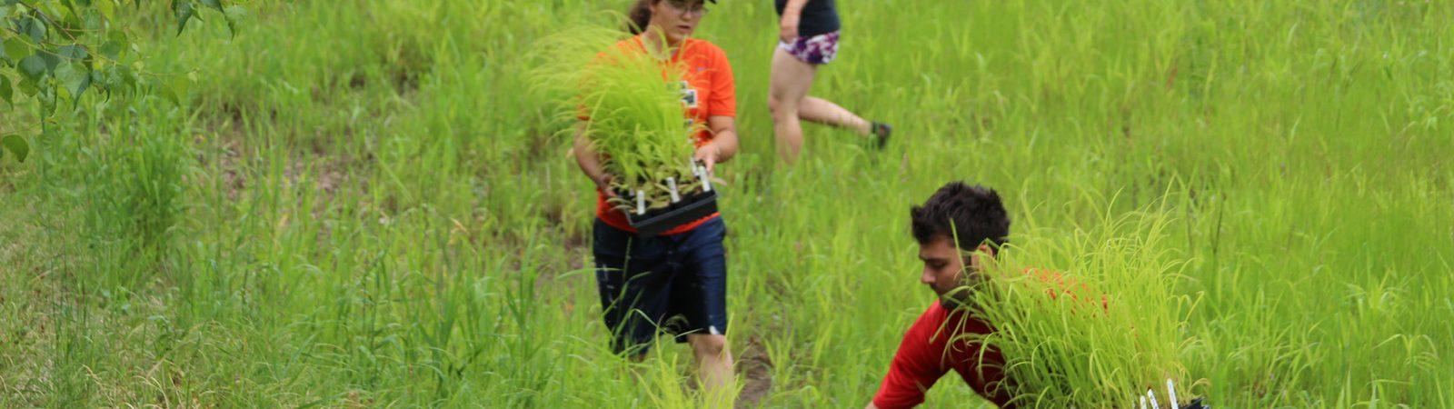 Northland College students and alum prepare rain garden