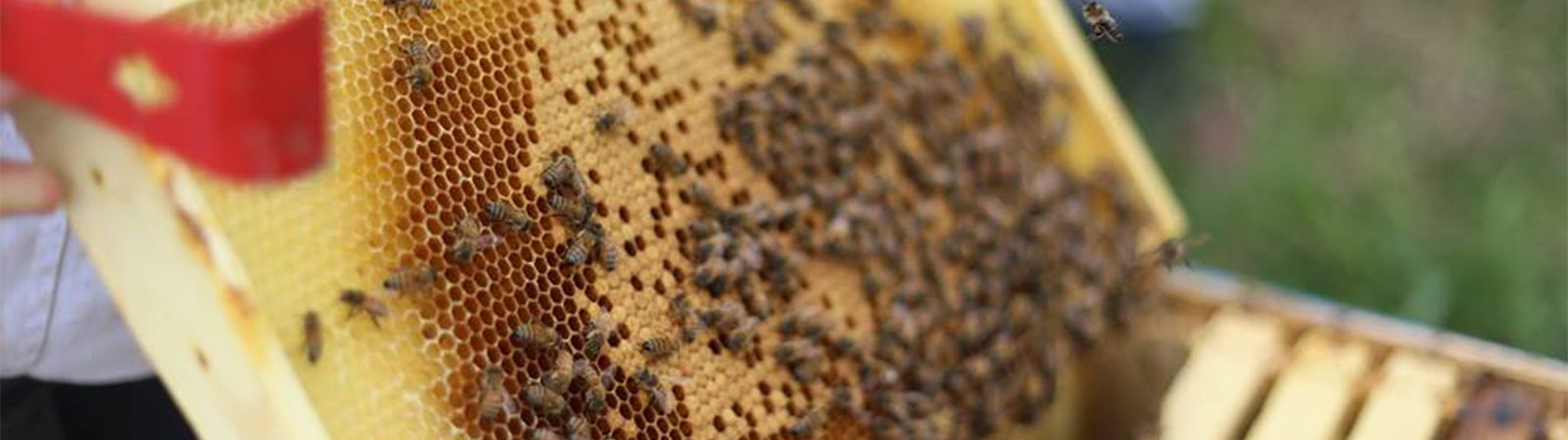 Lily Springs Farm Bees