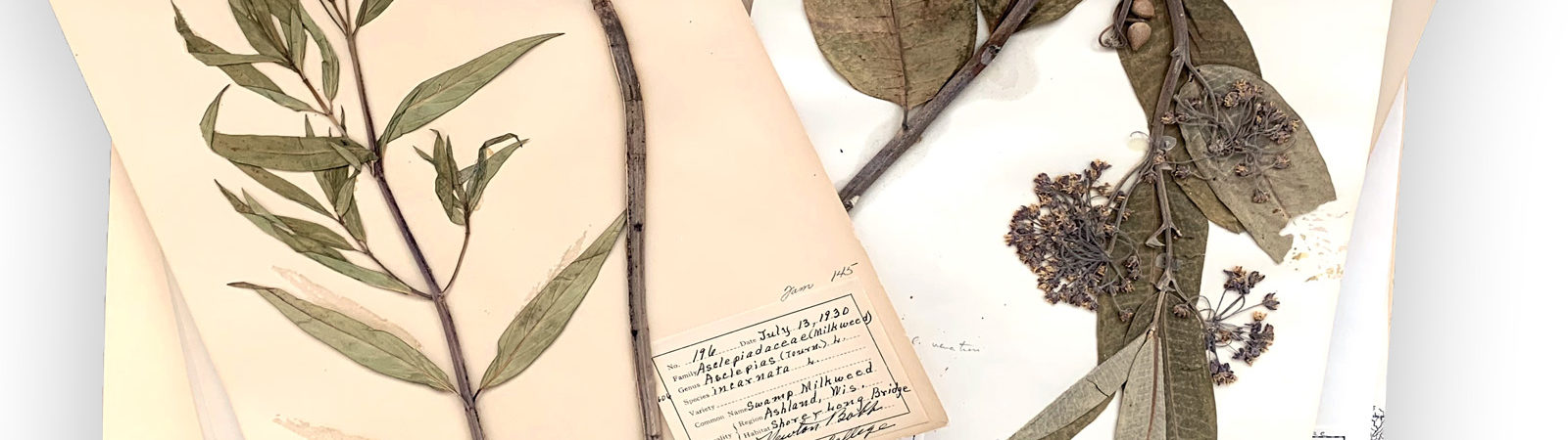 photo of Newton Bobb's plant specimens