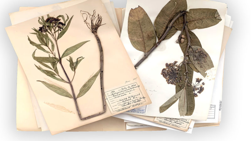 photo of Newton Bobb's plant specimens
