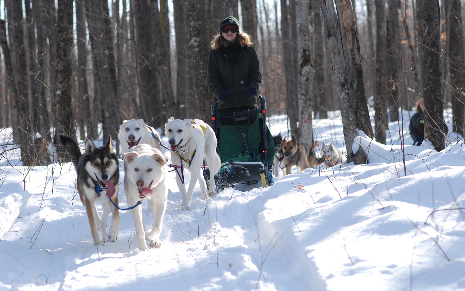 Northland College students dogsledding in woods.