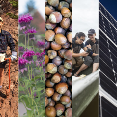 A collage of climate initiatives