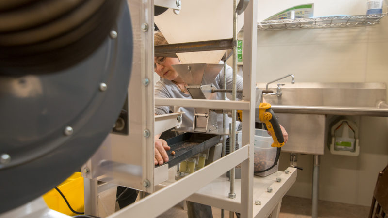 Northland College provides space in the Hulings Rice Food Center for small-scale processing of regional hazelnuts.
