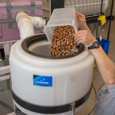 Hazelnuts being poured into processing machine