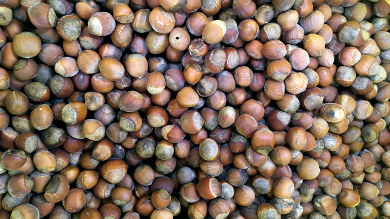 Hazelnuts grow in most soils, are drought resistant, and native to Wisconsin.