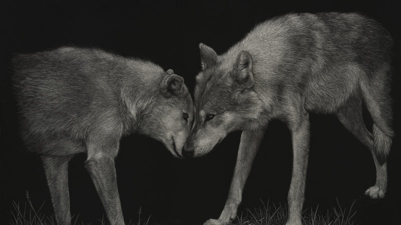Scratchboard of two wolves