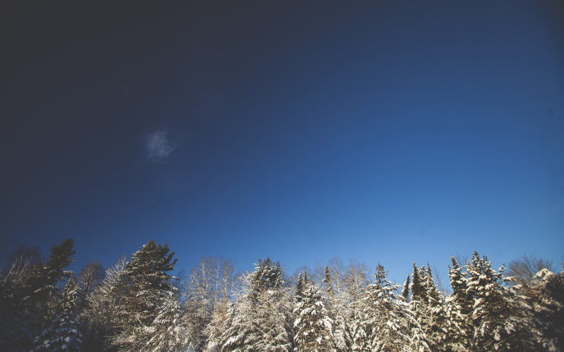 winter landscape of trees and sky
