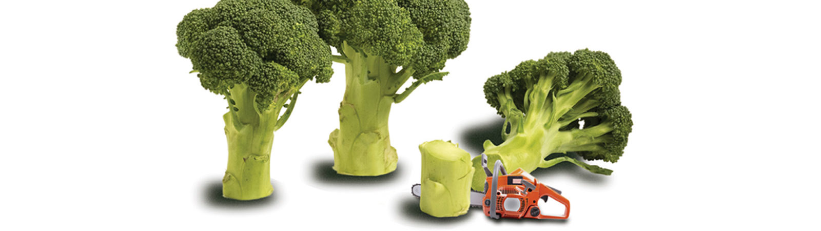 Image of broccoli standing like trees with a chainsaw