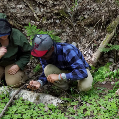 Northland College students search for orchids as part of research project.