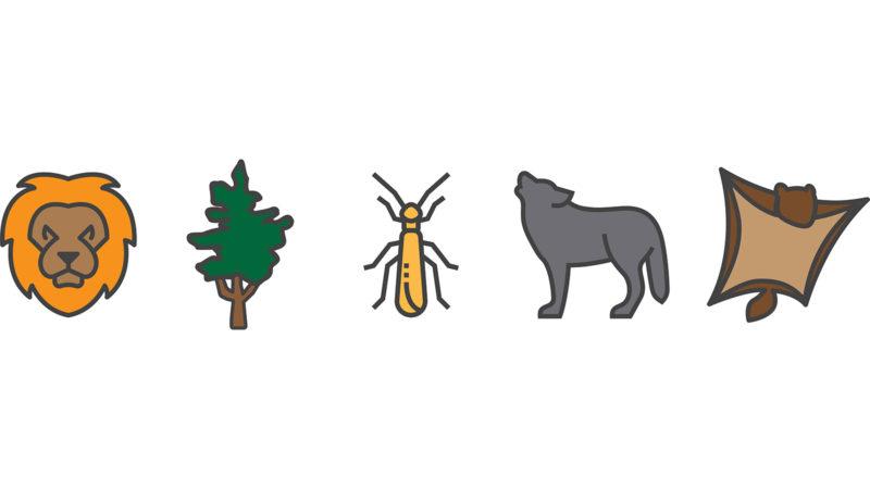 Wildlife icons to illustrate wildlife reearch.