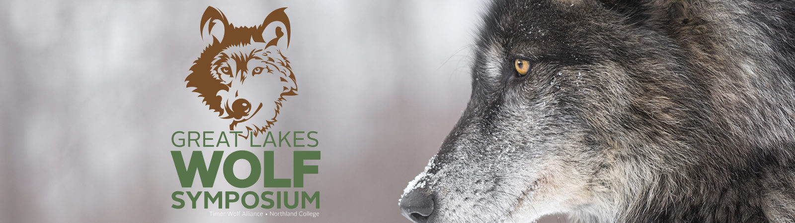 wolf in winter with symposium logo