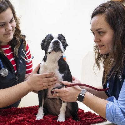 Northland graduates Faye and Margaret Koosmann at their vet clinic.