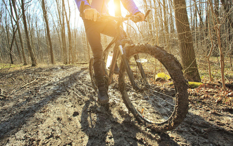 Mountain bike forest ride