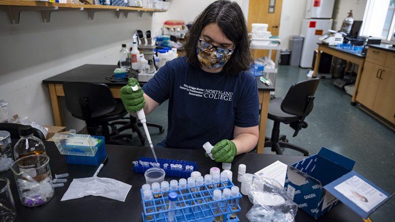 Northland College Professor Alissa Hulstrand conducts genetic testing.